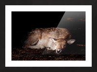 Fallow Deer 2 Picture Frame print