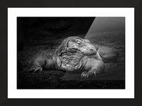 Komodo Dragon Picture Frame print