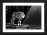 Wolf 1 Picture Frame print