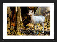Fallow Deer 3 Picture Frame print
