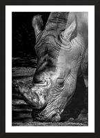 Rhinoceros Picture Frame print