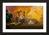 Lion Picture Frame print