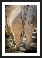 Rhinoceros 2 Picture Frame print