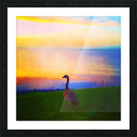 looking out Picture Frame print