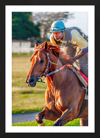 Racehorse11 Picture Frame print