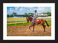Racehorse04 Picture Frame print