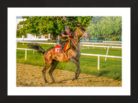 Racehorse12 Picture Frame print