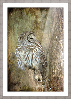 Grungy Owl Picture Frame print