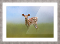 Spotty the Fawn Picture Frame print