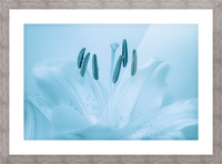 Blue Lily Picture Frame print