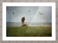 Bald Eagle on Tree Trunk Picture Frame print