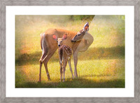 Doe with fawn looking back Picture Frame print