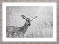 Pretty Doe Picture Frame print