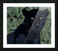 Black Jaguar. Clayton T Picture Frame print