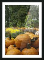Pumpkins Picture Frame print