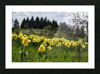 Flowers on the Hills Picture Frame print
