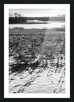 Cattails at Dawn Picture Frame print