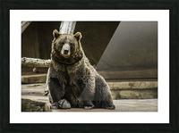 Greetings  Brown Bear  Picture Frame print