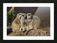 Take Watch  Meerkats  Picture Frame print