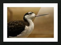 Shine Little Bird  Stilt  Picture Frame print