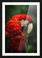 Parrot Portrait Picture Frame print