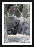 Baby Gorilla  Picture Frame print