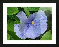 Refreshing Nature Picture Frame print
