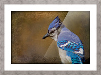 Blue Jay with texture Picture Frame print