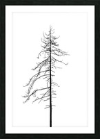 Tree silhouette Picture Frame print