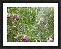 hummingbirdindesertwillow lrg Picture Frame print
