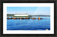 Sea Lions Hanging Out Picture Frame print