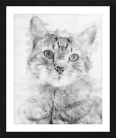 Kitten Noir Picture Frame print