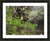 Tropical Bird in Tree Picture Frame print
