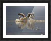 Pelican Reflections Picture Frame print