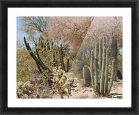 Cactus Garden Picture Frame print