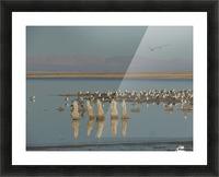 The Salton Sea Picture Frame print