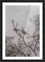 Couple of Parrots in the Top of a Tree Picture Frame print
