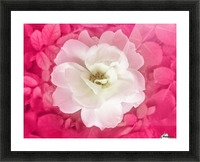 White Rose Top View Picture Frame print