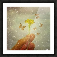 Butterflies Charmer Picture Frame print