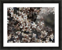 Lovely Blossoms Picture Frame print