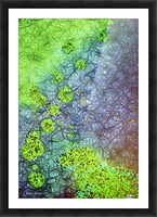 Green Paint Drops_120828_17039 HXSYV Picture Frame print