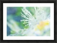 landscape_2_0965 Picture Frame print