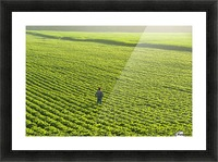 Portrait of a farmer walking through a large green soybean field in central Iowa in summer; Iowa, United States of America Picture Frame print