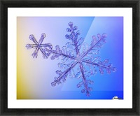 Photomicroscopic close up of two snowflake crystals, Alaska Picture Frame print