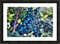 Bunches of Grapes Picture Frame print