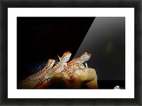 Reptile movie Stars Picture Frame print