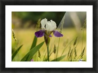 Iris Doll Picture Frame print