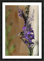 Bee Love Picture Frame print