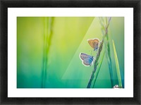 Butterfly summer background Picture Frame print