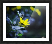 Yellow flowers Picture Frame print